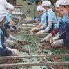 Trung Quốc 'bỏ' gạo chuyển qua 'ăn' hạt điều