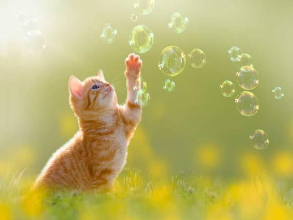 Mơ thấy mèo vàng đánh con gì dễ trúng?