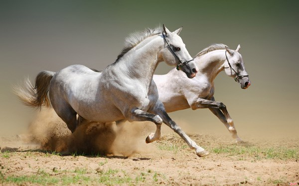 Nằm mơ thấy con ngựa đánh số mấy chắc ăn nhất