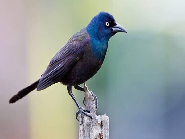 Mơ thấy chim là điềm báo gì, đánh con nào?